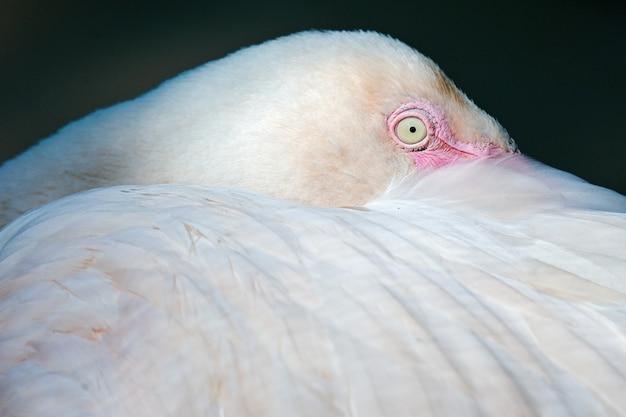 Gros plan oiseau flamant rose