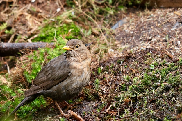 Gros plan d'un oiseau moineau domestique mignon dans une forêt