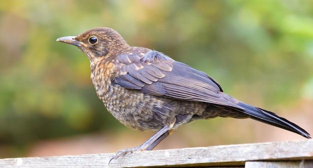 Gros plan d'un oiseau sur un mur flou