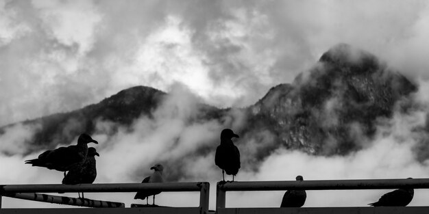 Gros plan, de, oiseau, perching, sur, métal, balustrade, furry, ruisseau, colombie britannique, canada