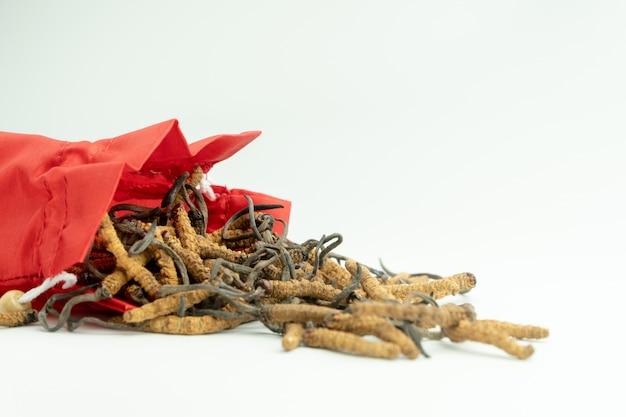 Gros plan d'ophiocordyceps sinensis ou de cordyceps aux champignons dans un sac en tissu rouge