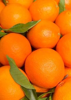 Gros plan d'oranges espagnoles savoureuses fraîchement récoltées