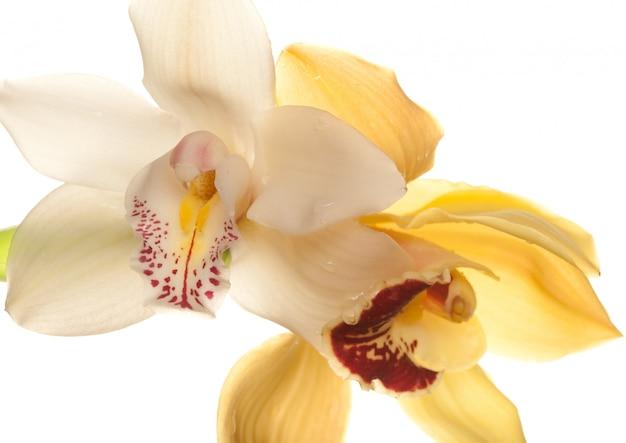 Gros plan d'orchidée jaune