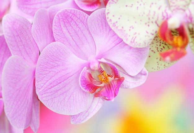 Gros plan, orchidées