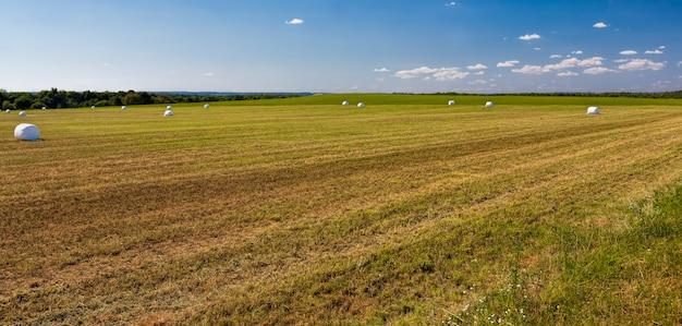 Gros plan sur la paille d'herbe