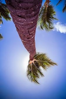 Gros plan de palmier sur l'île tropicale.