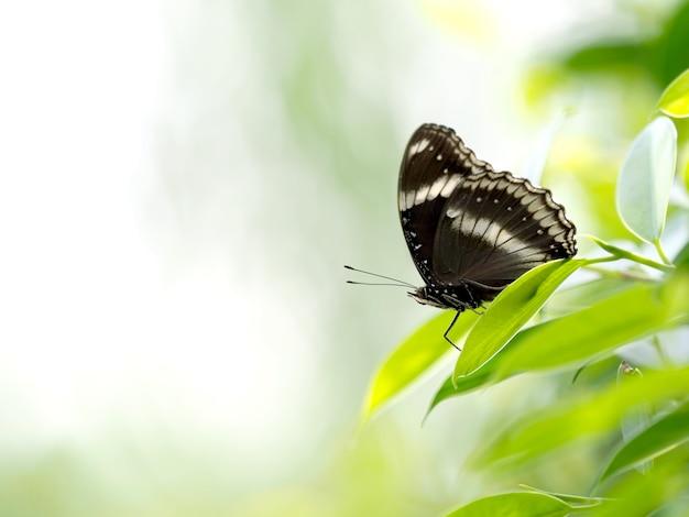Gros plan d'un papillon noir sur une feuille verte