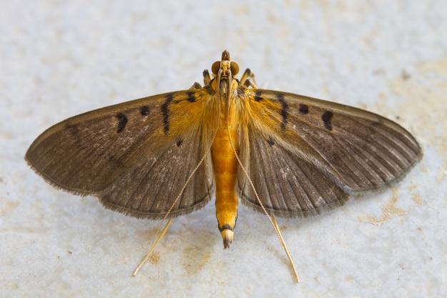 Gros plan, papillon