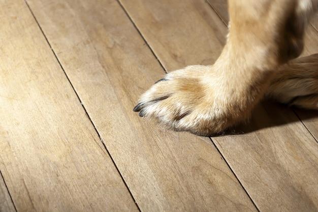 Gros plan d'une patte de chien sur une surface en bois