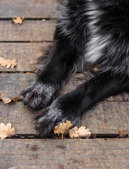 Gros plan pattes de chien à l'extérieur