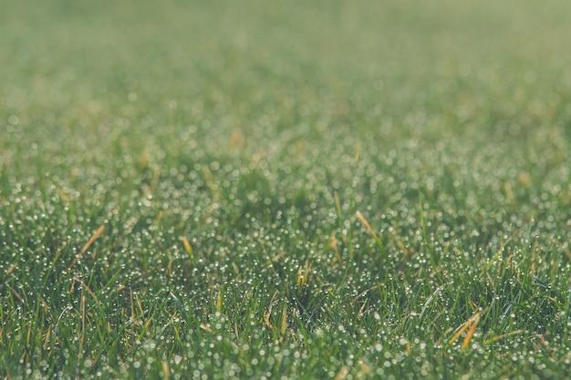 Gros plan d'une pelouse verte sous la lumière du soleil