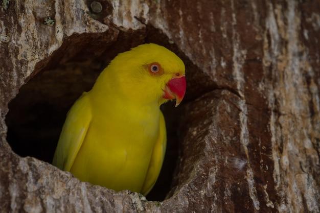 Gros plan perroquet jaune dans le nid