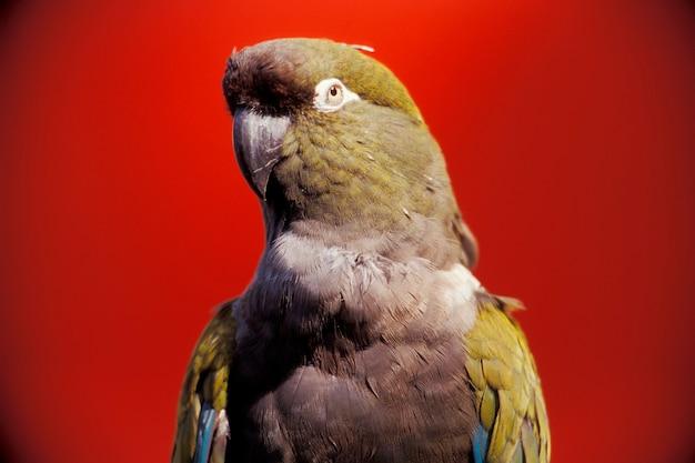 Gros plan, perroquet