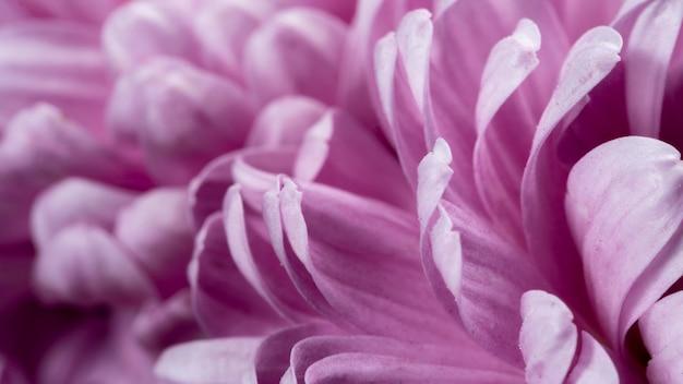 Gros plan pétales violets