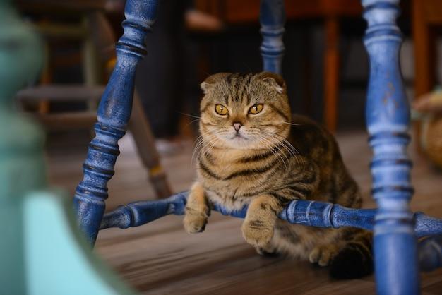 Gros plan petit chat sur le sol dans un café animal