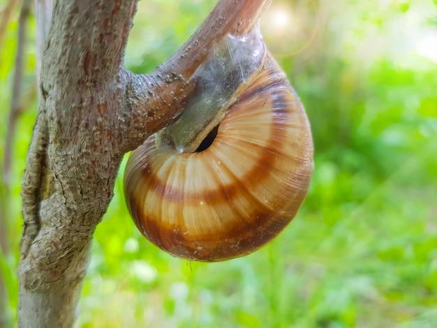 Gros plan d'un petit escargot de jardin assis sur une branche d'arbre sur fond de nature par une journée d'été ensoleillée.