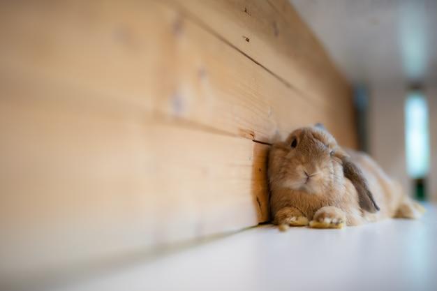 Gros plan petit lapin mignon sur la table en bois