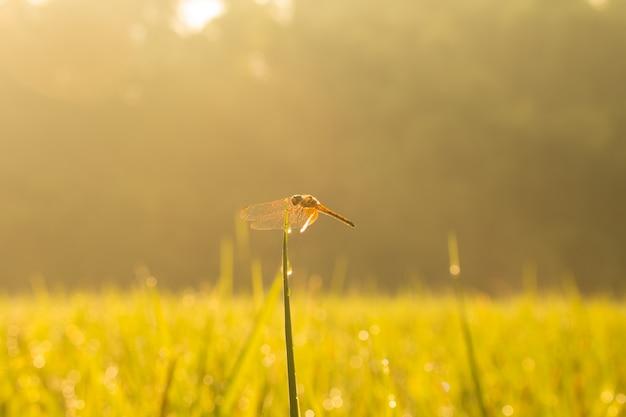 Gros plan d'une petite belle libellule, ils sont le meilleur tueur de moustiques dans la nature