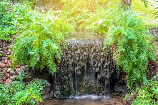 Gros plan d'une petite cascade dans le jardin