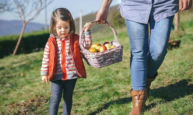 Gros plan d'une petite fille femme portant un panier en osier avec des pommes biologiques fraîches. concept de nourriture saine et de temps de récolte.