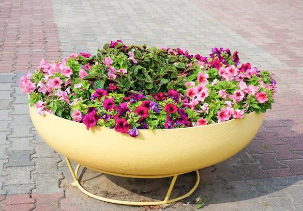 Gros plan de pétunias colorés dans un grand pot dans un parc