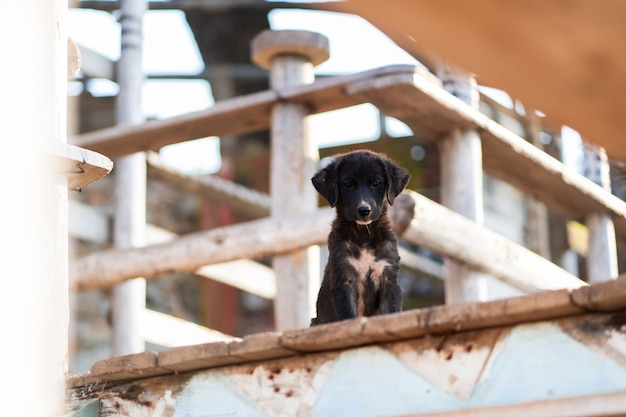 Gros plan photo de drôle de race mélangée heureuse chien noir et blanc assis sur une jetée en bois à l'extérieur avec un fond marron. concept de meilleurs amis humains et animaux. concept d'abri.