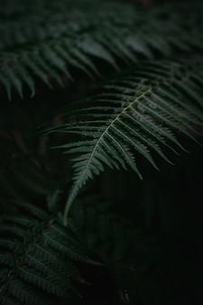Gros plan photo de fougère ton sombre