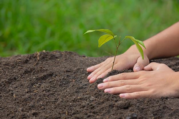 Gros plan photo de main tenant la plantation du jeune arbre de la plante