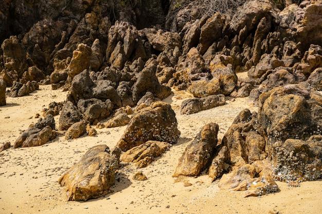 Gros plan de la photo de la nature sauvage sur l'île