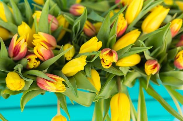 Gros plan photo de tulipes jaunes sur mur bleu