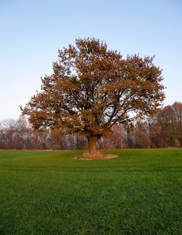Gros plan photographié d'un chêne en saison d'automne