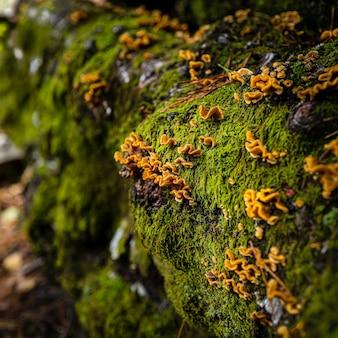 Gros plan de pierres totalement recouvertes de mousse et de fleurs jaunes