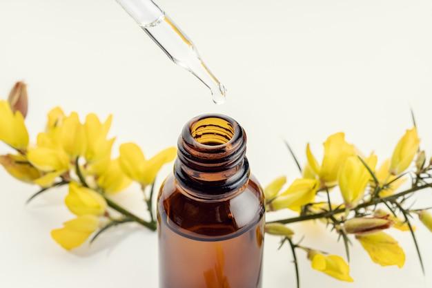 Gros plan d'une pipette, bouteille ambre et branche de fleur jaune à la surface. huile essentielle d'ajonc. aromathérapie à base de plantes
