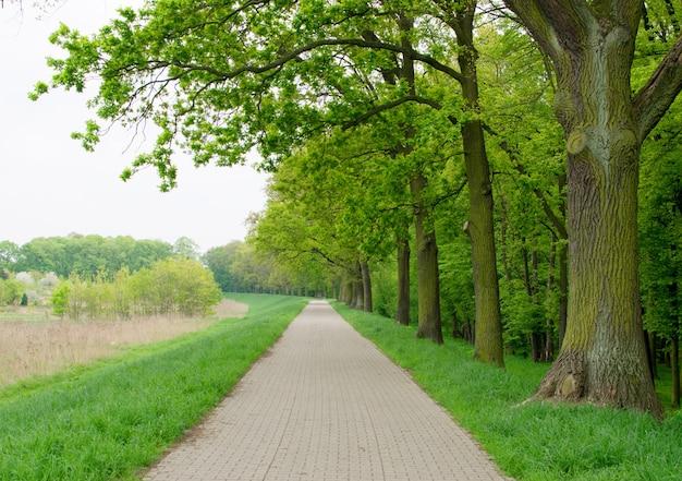 Gros plan sur la piste cyclable dans old green oak alley