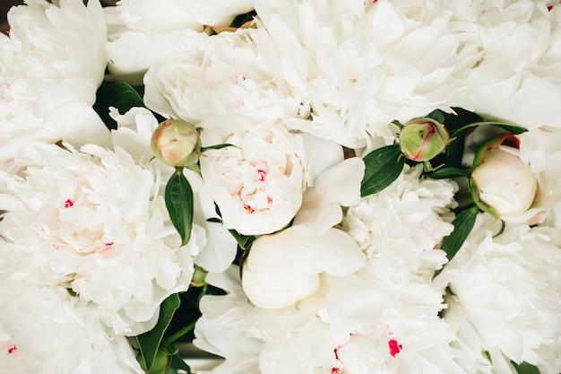 Gros plan, de, pivoine blanche, fleurs