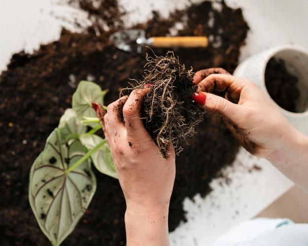Gros plan de plantation de bulbes de plantes dans le sol