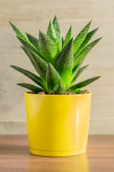 Gros plan d'une plante d'aloe vera dans un pot en céramique jaune sur fond en bois. jardinage domestique, fond pour texte
