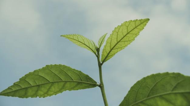 Gros plan, plante, feuilles