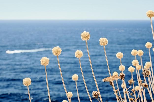 Gros plan d'une plante avec une mer floue