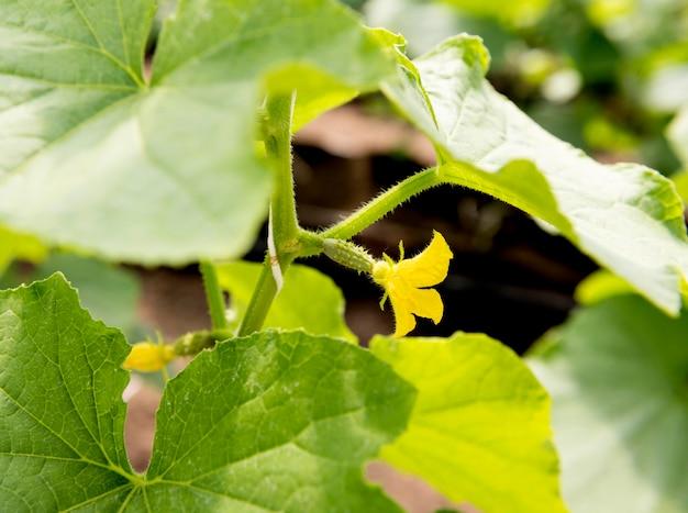 Gros plan plante avec petite fleur jaune