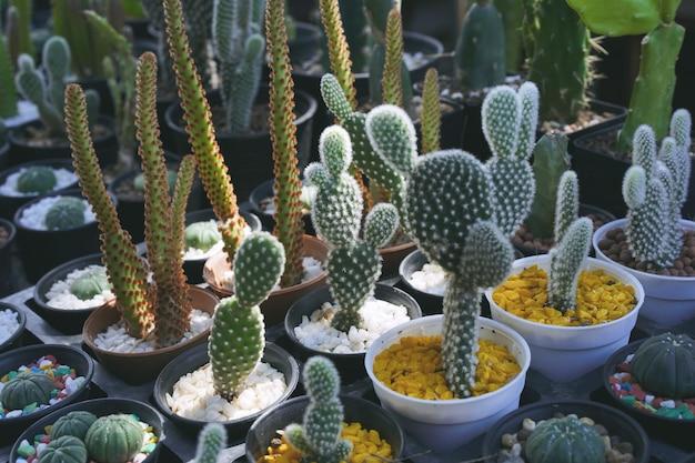 Gros plan de plantes de cactus dans le pot