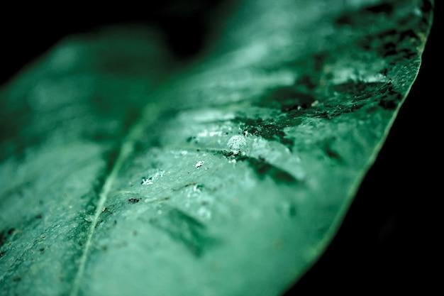 Gros plan de plantes vertes fraîches sur un flou