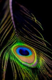 Gros plan d'une plume de paon remplissant le cadre, surface animale lumineuse