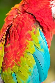 Gros plan sur les plumes colorées d'un perroquet