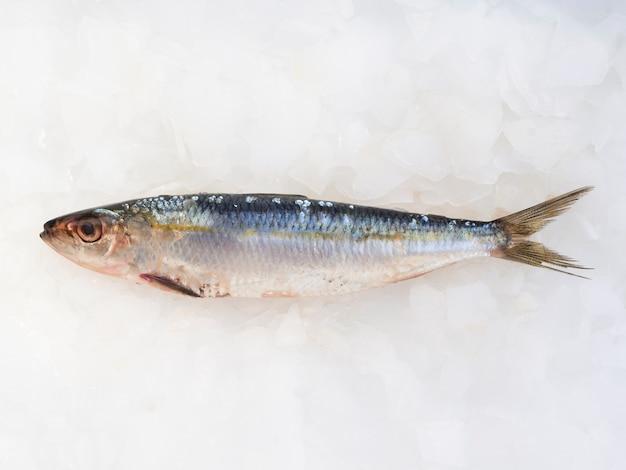 Gros plan, poisson, branchies, glace