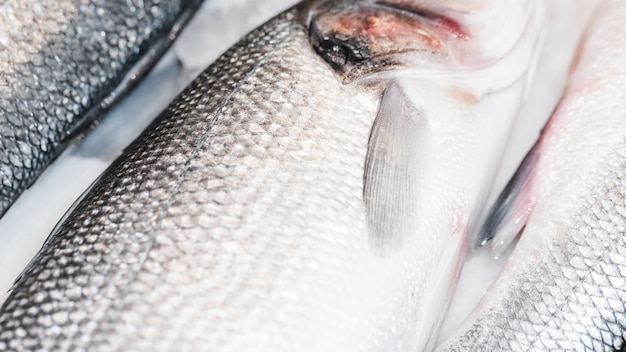 Gros plan, poisson frais, marché