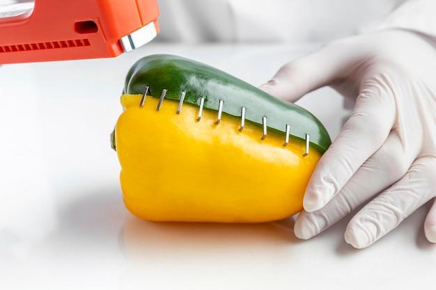 Gros plan de poivron doux agrafé génétiquement modifié