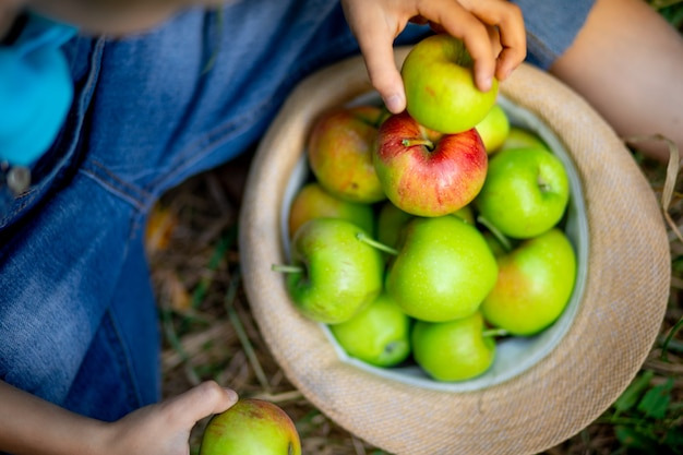 Gros plan de pommes vertes et rouges dans un chapeau sur l'herbe verte et les mains d'un enfant