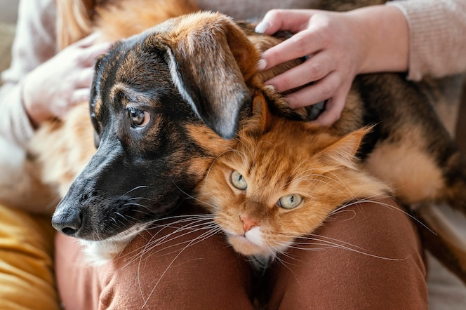 Gros plan propriétaire avec chat et chien
