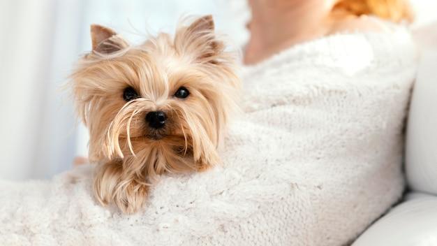 Gros plan propriétaire avec chien mignon